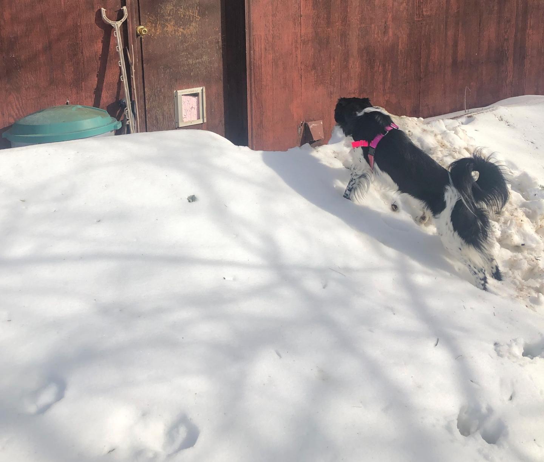 Dog on a snow drift